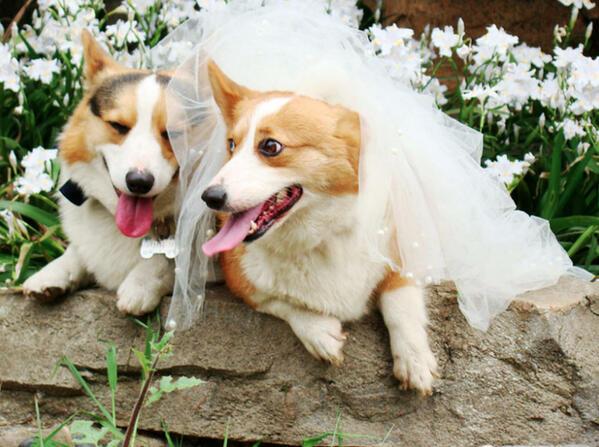 結婚式の招待状での返信メッセージを気の利いたものにする7つの方法