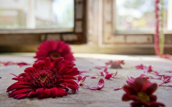 キリスト教式葬儀、普通とどう違うの?違いが判る7つのポイント。