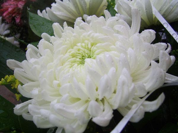 献花の場面で知らないと恥をかく7つの常識