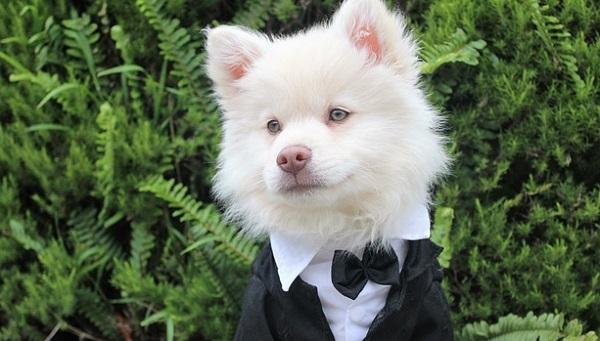 余興で歌う結婚式ソングランキングトップ5!選ぶならコレ