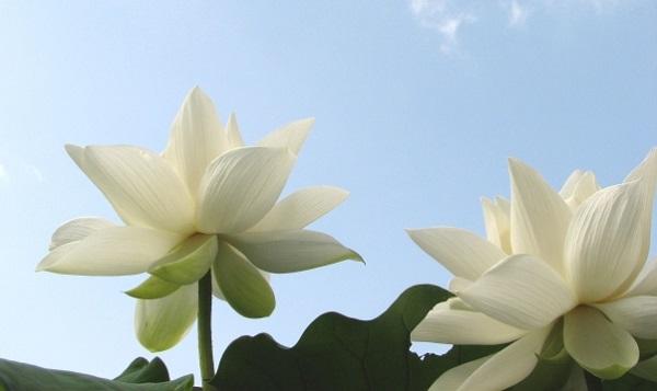 仏教における49日の意味と喪主が心得ておきたい5つの事